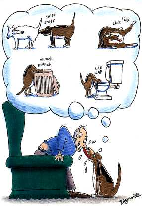 Vicces kutya
